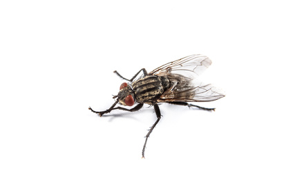House Fly Infestation Pest Control London