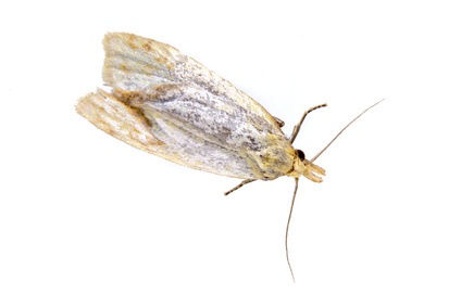 Clothes moth pest control London